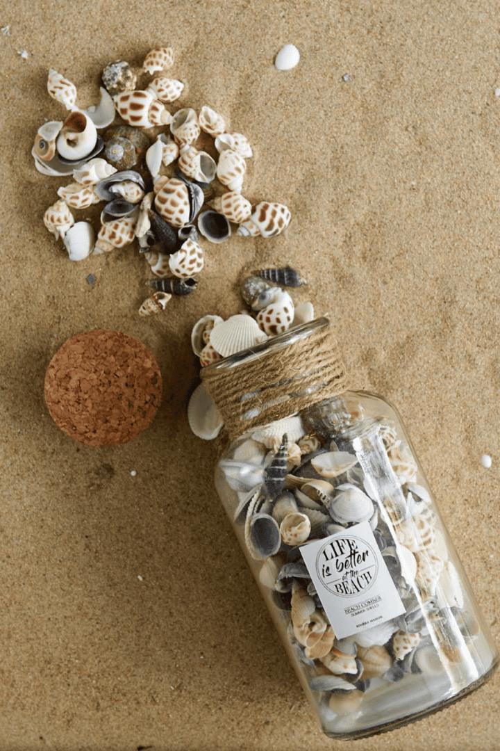 Sandy Shores Shells Multi Color