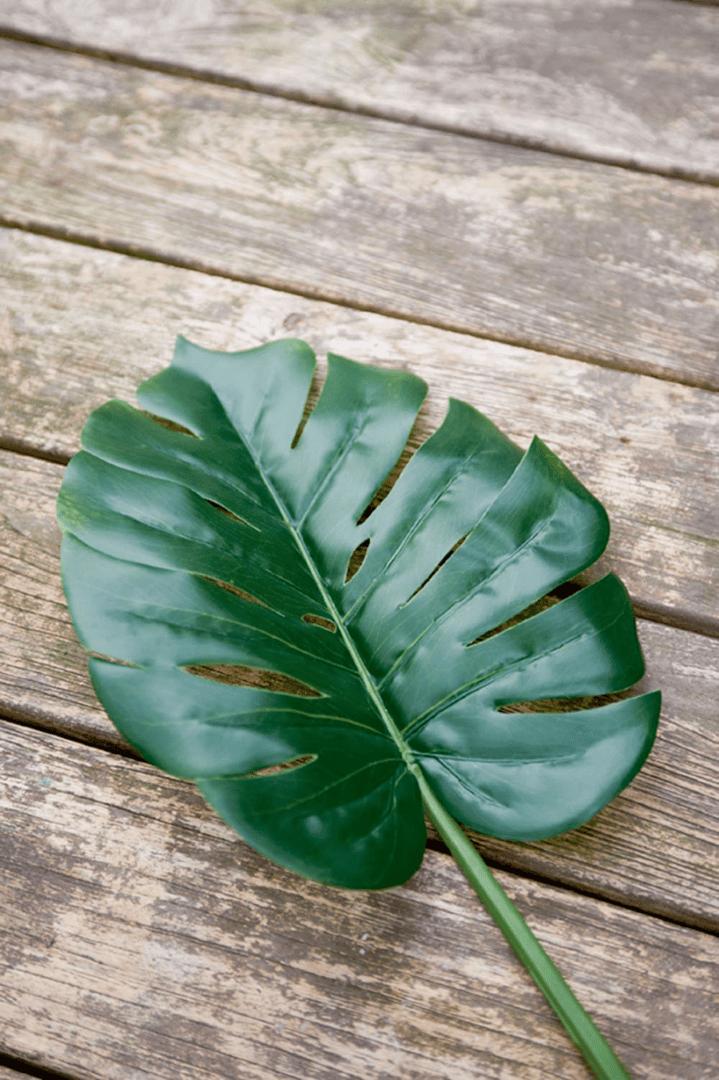 Monstera Leaf M