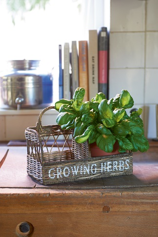 Rustic Rattan Kitchen Herb Garden
