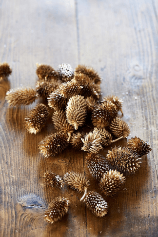 Classic Pinecones champagne
